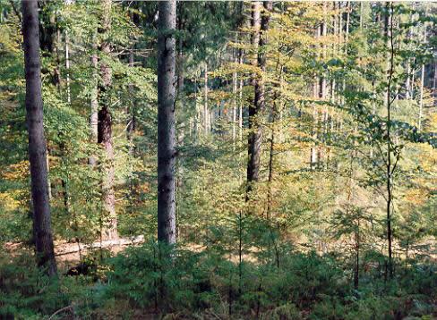 Mnohé lesné porasty sú obhospodarované prírode blízkymi spôsobmi.