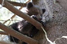 Obrázok Medvieďa