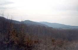 Obrázok les